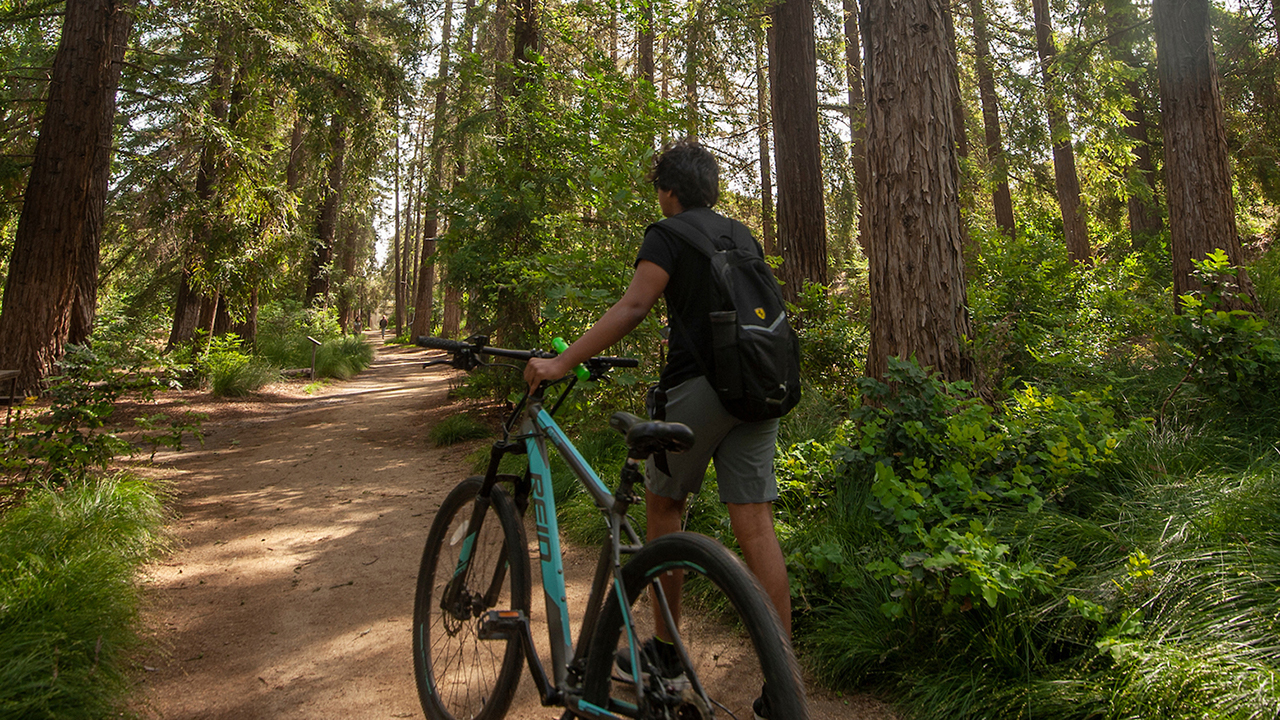student in redwood grove with bike